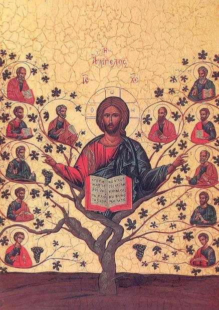 Christus Bibel Weinstock