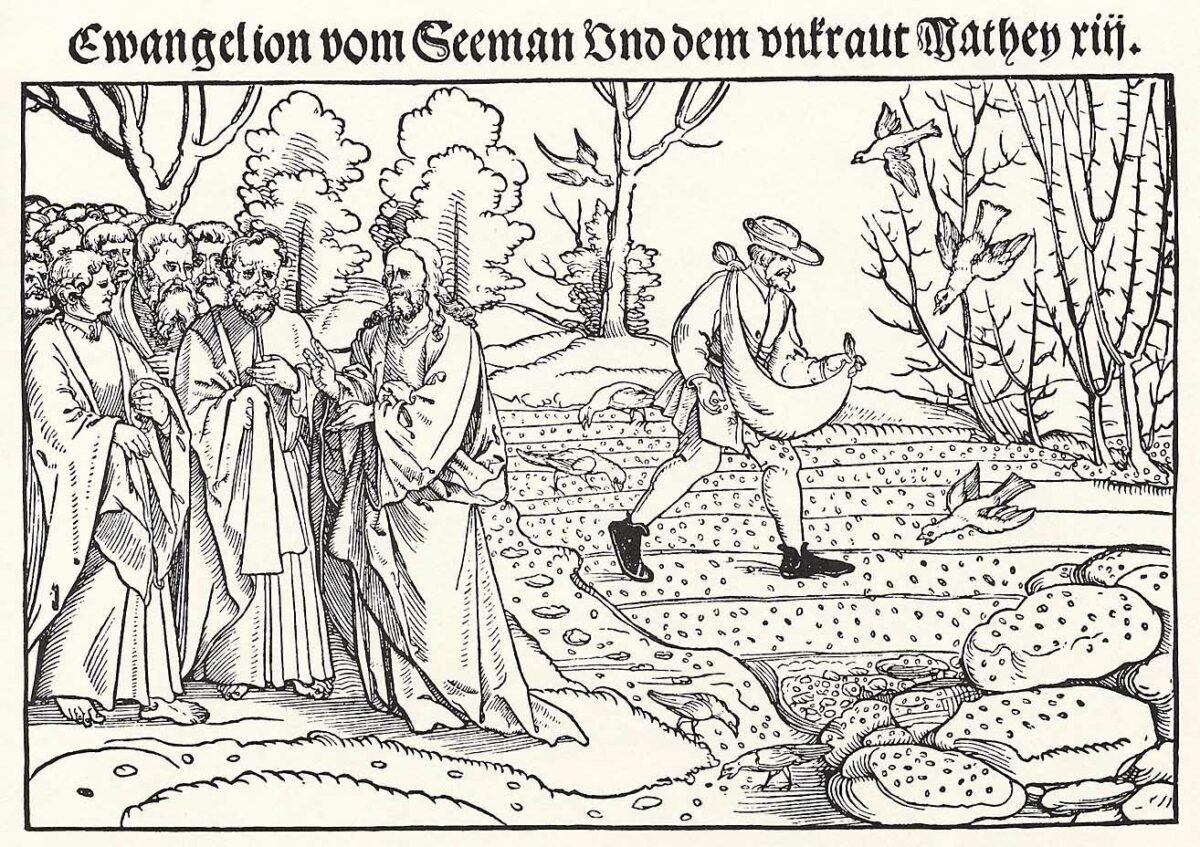 Schoen, Erhard: Gleichnis vom Sämann